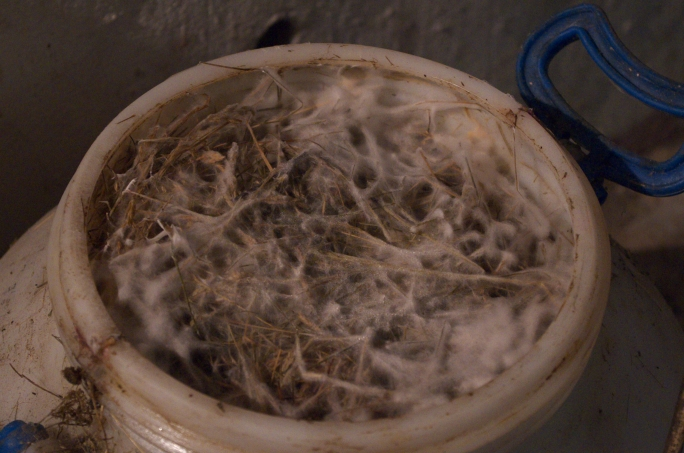 I don't know what this is, but it seems to be fermenting rather nicely. Possesses a uniquely subtle odor.